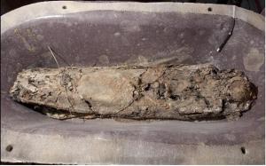 """Vista de la """"mòmia"""" dins del sarcòfag"""